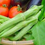 オクラは低カロリーで栄養満点!食物繊維が豊富で便秘改善に効果あり