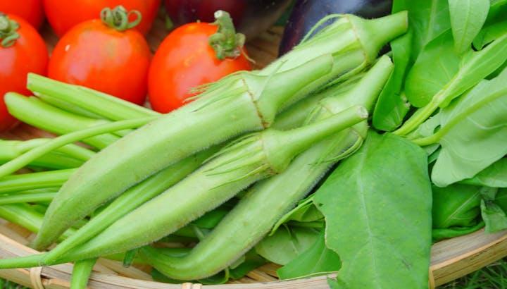 オクラのネバネバは元気の源!低カロリー・低糖質でダイエット中もおすすめ