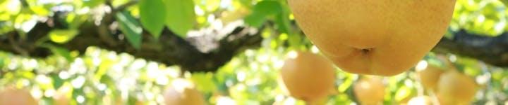 梨のカロリー・糖質は?どんな栄養があるの?ダイエット中にフルーツを食べたい方必見
